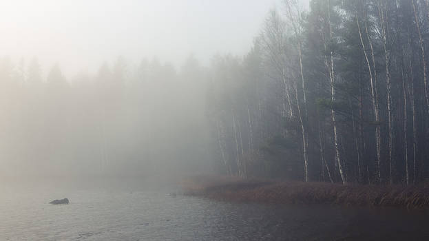 Foggy lake and forest