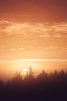 Sunrise over forest
