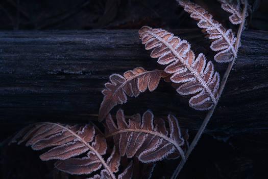 Frozen fern leaves