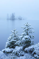 Foggy winter lake and spruce trees