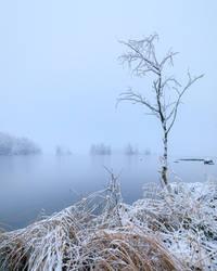 Lonely tree by JuhaniViitanen