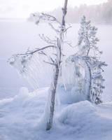 <b>Frozen Trees</b><br><i>JuhaniViitanen</i>