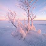 Winter spirit trees