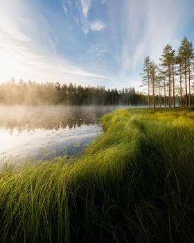 Forest lake sunrise