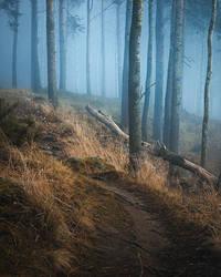 Foggy forest landscape