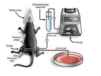 Mouse Intra-Arterial Chemotherapy