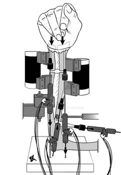 Wrist Biomechanics