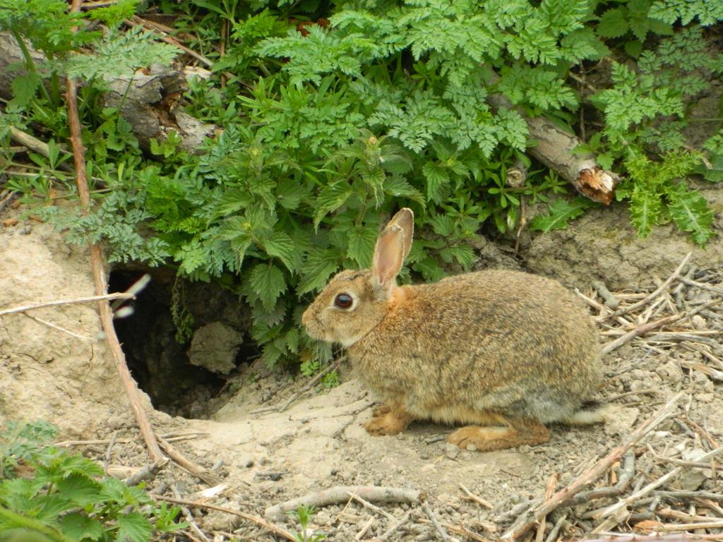 Rabbit 1 by GallifreyGirl1