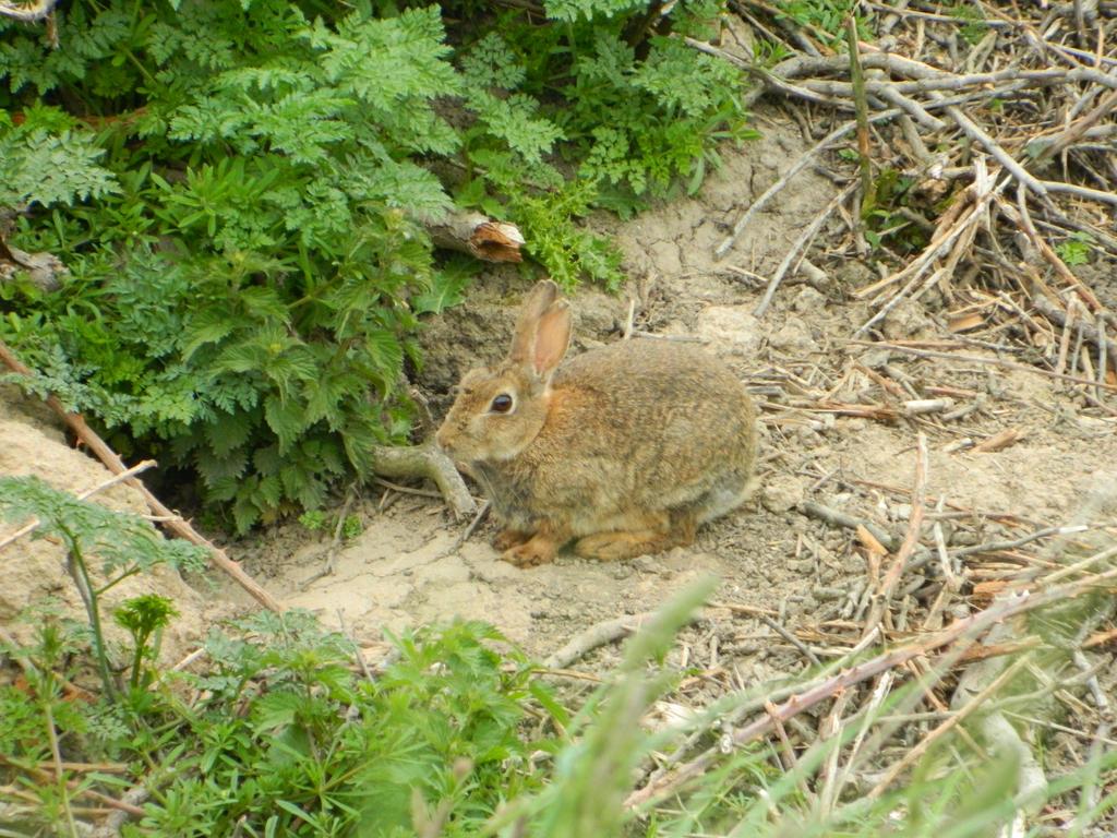 Rabbit 2 by GallifreyGirl1