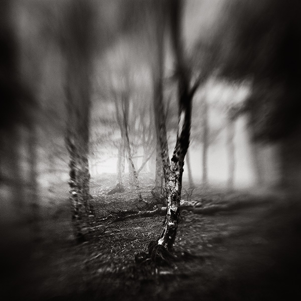 In The Wood by xavierrey