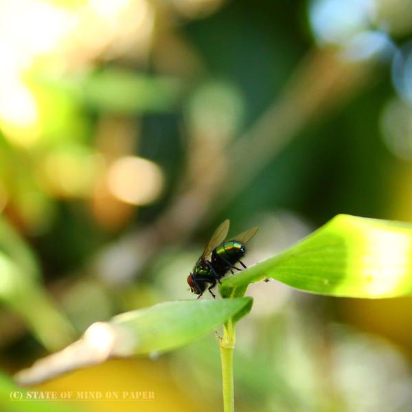 fly by Skool4Psychs