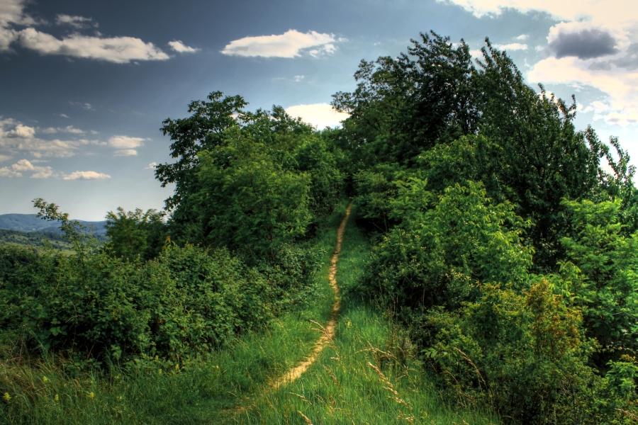 pathway by lucifersdream