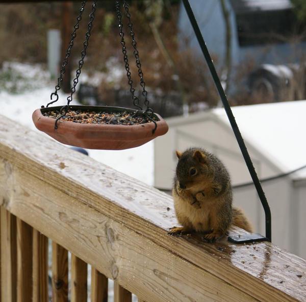 Hi there Mr. Squirrel by SakuraOneeSama