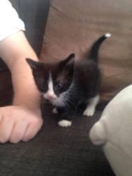 I'd like you all to meet little Jiji