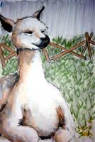 Undramatic Llama by CaitlinWonder-Girl