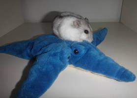 Hamster by Melika1991