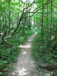 Journey's Path