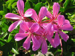 Fushia Floral