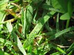 Grass - Sunlight