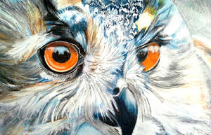 Owl by Chikoceoi