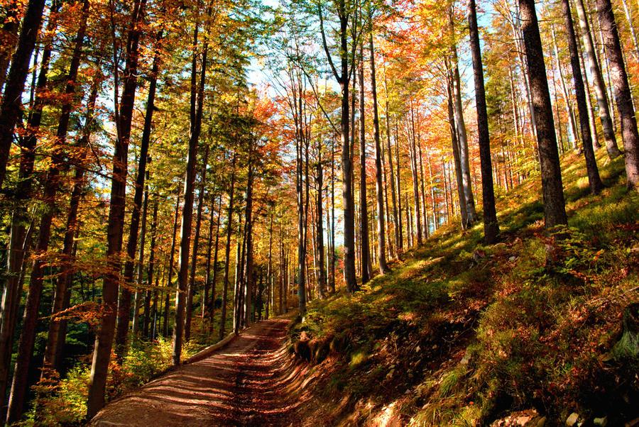 Autumn by MirdautasVrasS