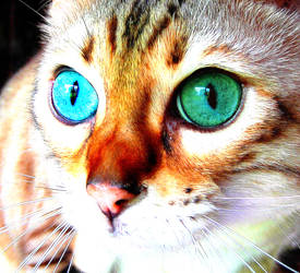 Cats by SilverandZuko