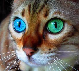 Cats again.. by SilverandZuko
