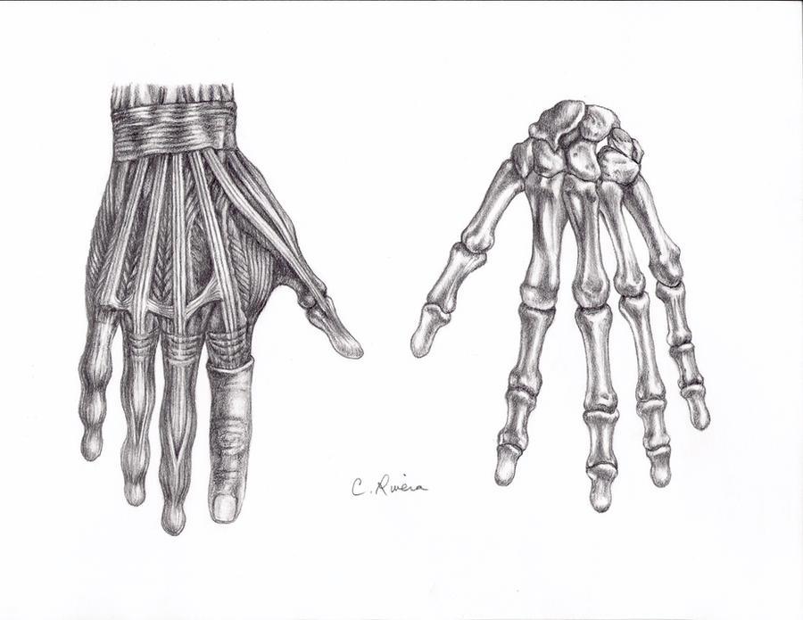 skeletal hands by carminasimdesigner on deviantart