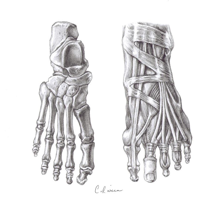 Skeletal Feet By Carminasimdesigner On Deviantart