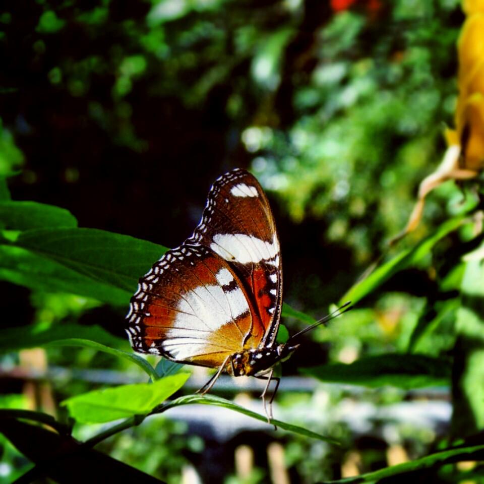 Butterfly by jeyk-O