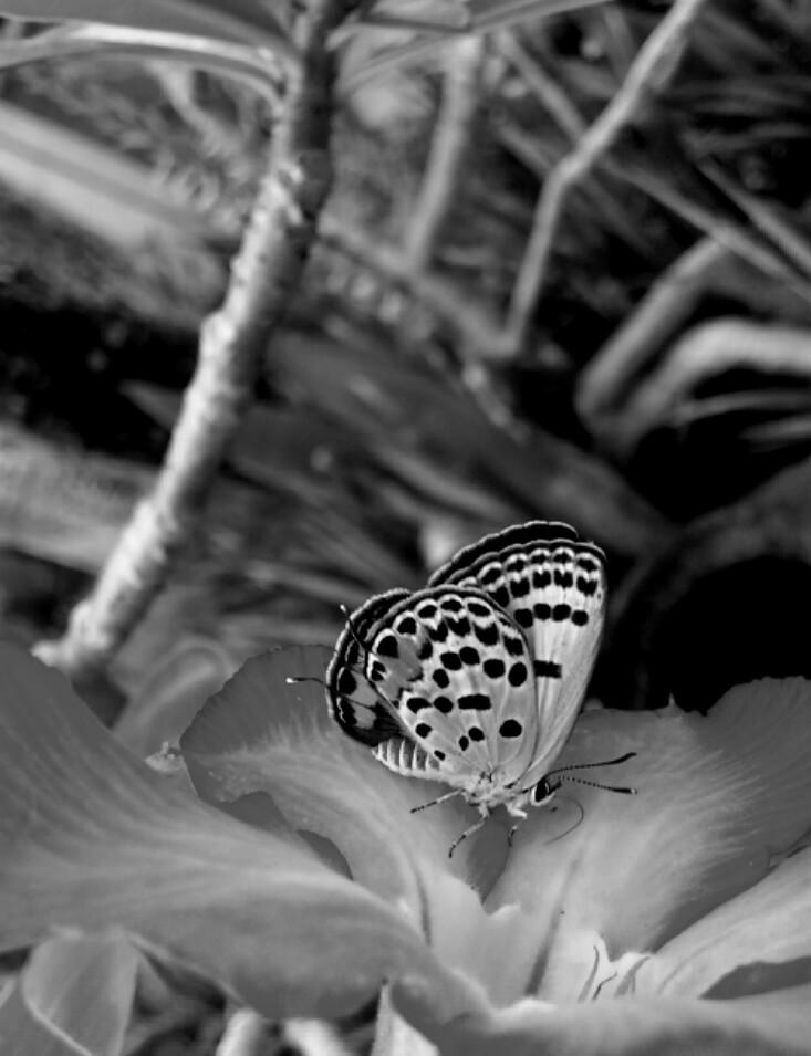 Pollination by jeyk-O