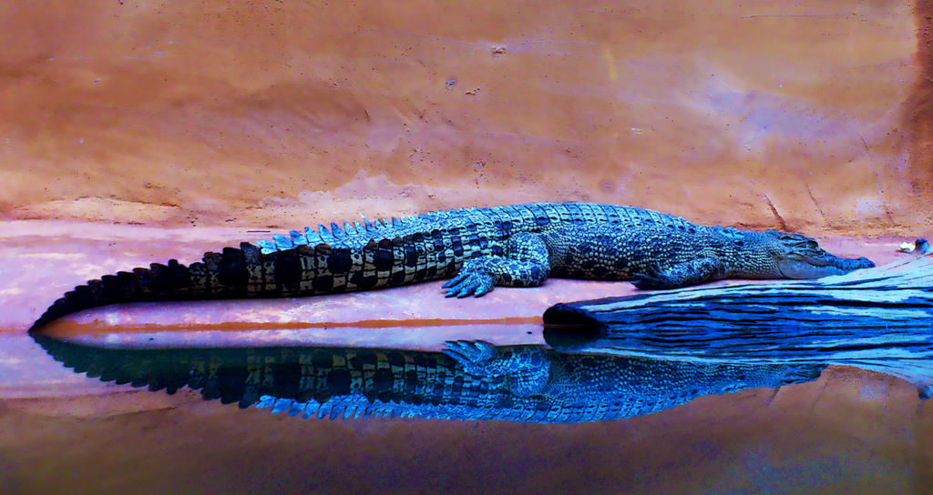 Scaly reflection by jeyk-O