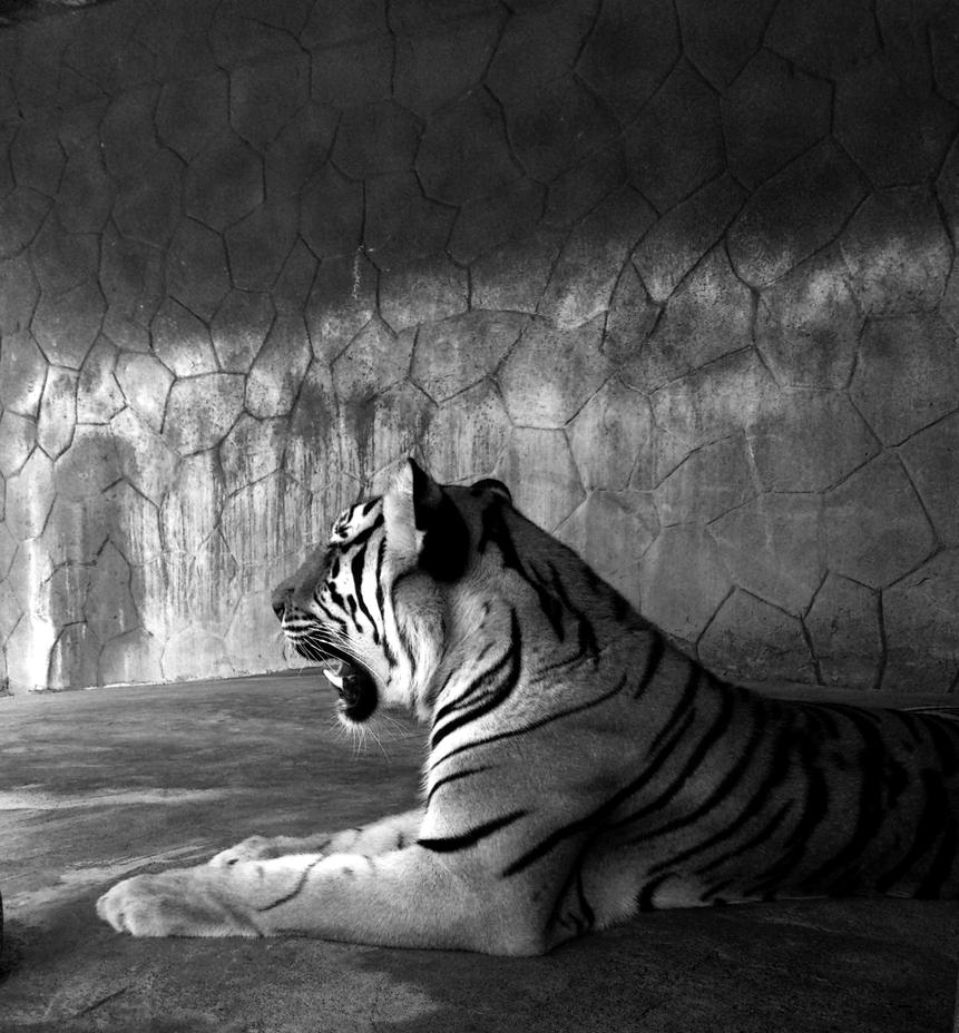 Big Cat 2.0 by jeyk-O