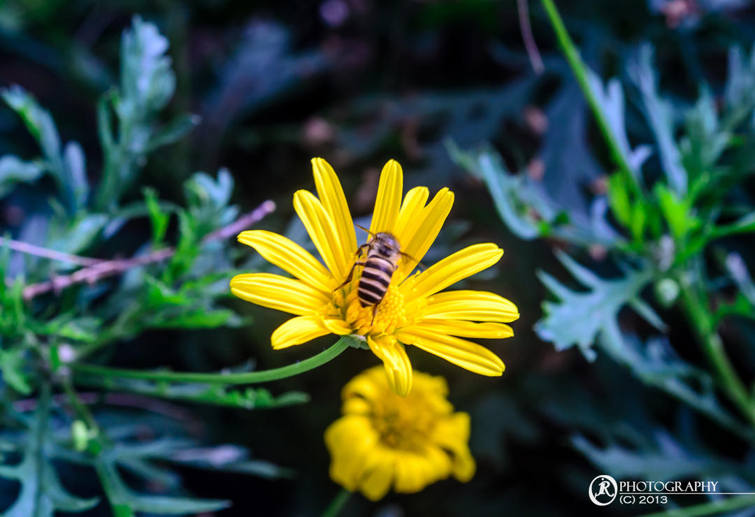 Busy as the cliche Bee by jeyk-O