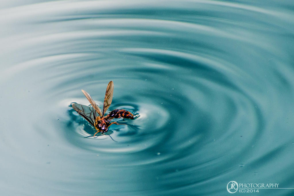 Surface Tension by jeyk-O