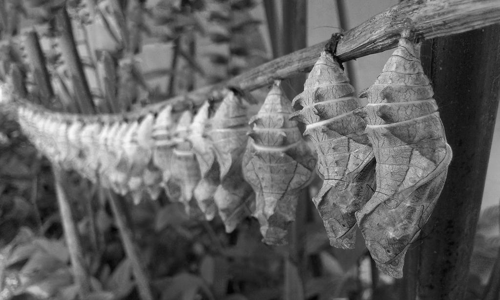 Butterfly assembly line by jeyk-O