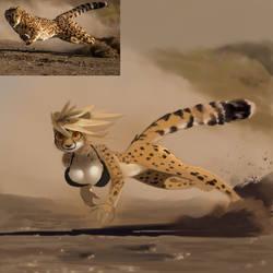 Cheetah by Shnider