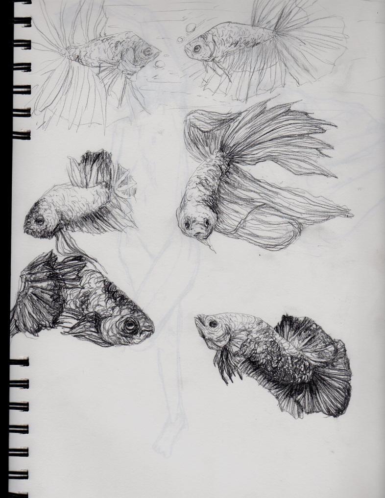 Betta sketches by TeezGeez on DeviantArt  Betta Fish Drawings