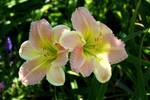 Ensley Garden Flowers (2)