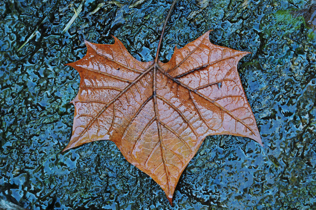 A Wet Leaf by Merhlin