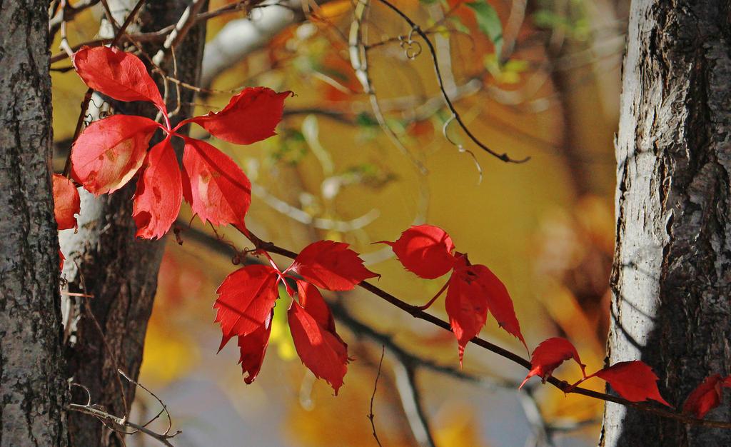 Early November Red by Merhlin