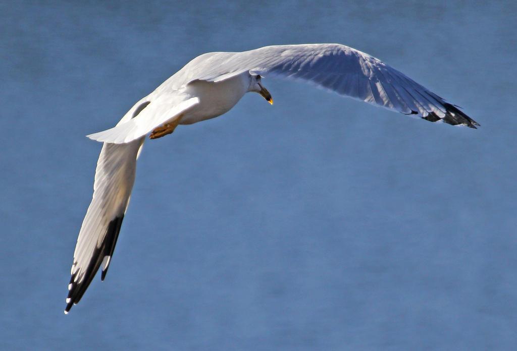 The Wind Beneath My Wings by Merhlin