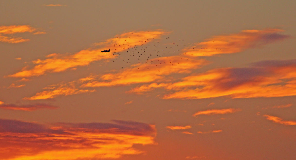Man and Bird Return Home To Roost by Merhlin