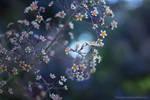 Little dark flowers