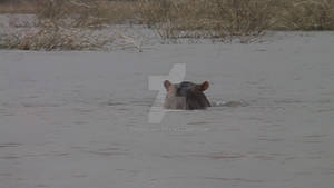 Hippo submarine