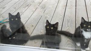 I think they want in. by VampireGodesNyx