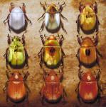 Chromatic Entomology IV by CristinaSamsa