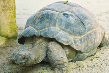 Turtle by iana88