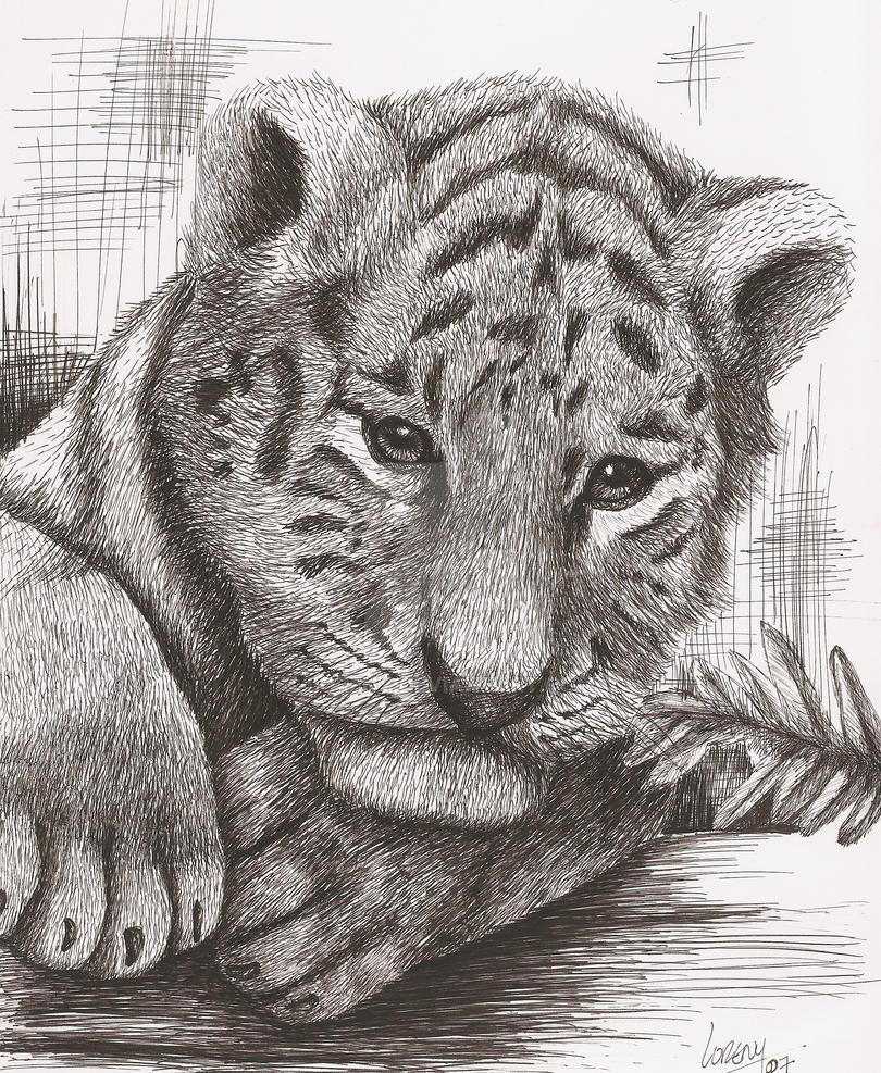 Tigre by loreny