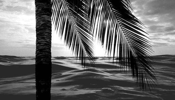 Tropical Darkroom #216